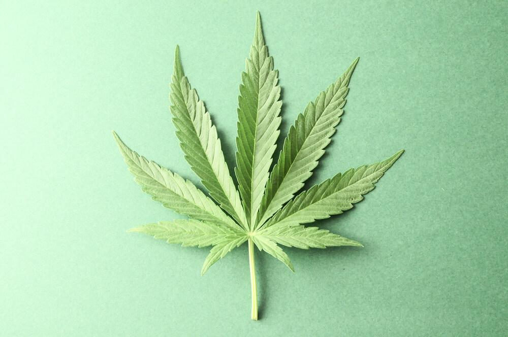 difference between CBD and marijuana - Panda CBD